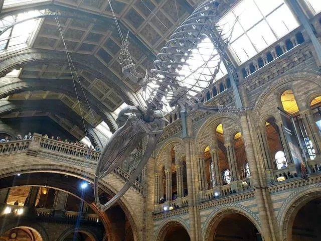 blue whale in Hintze Hall