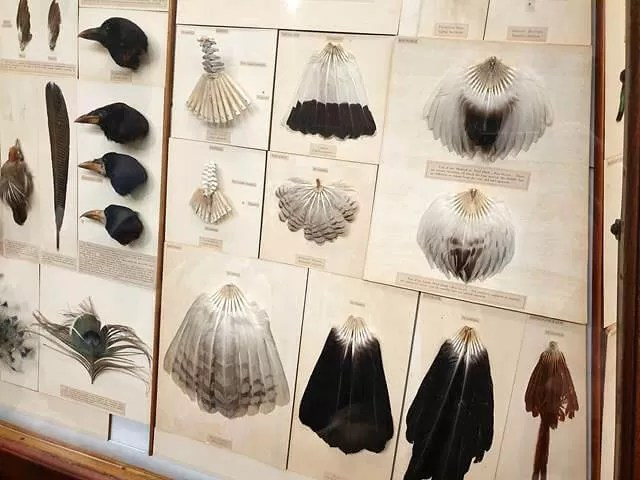 feathers at national history museum