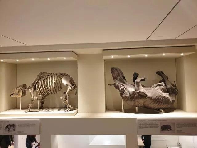 rhino and exhibits