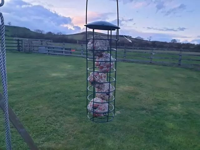 hanging bird feeder with fat balls