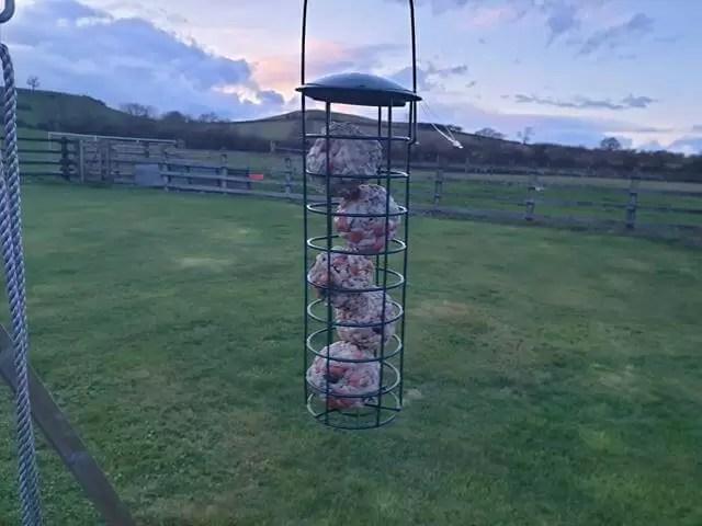 hanging bird feeder with fat balls