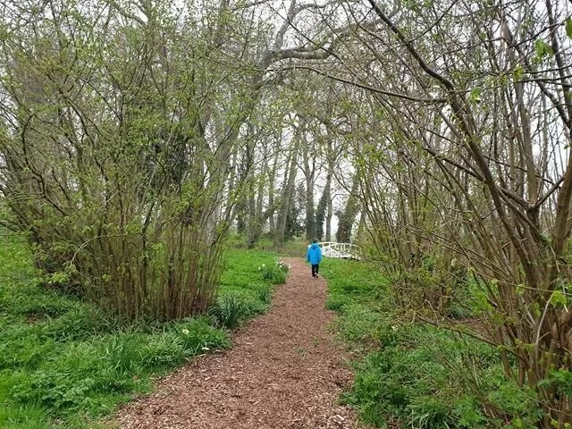 walking woodland walk