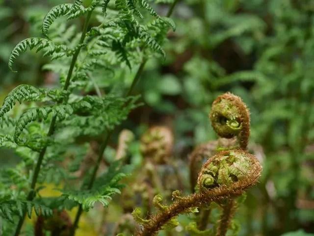 ferns in he woods