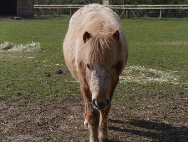 friendly pony
