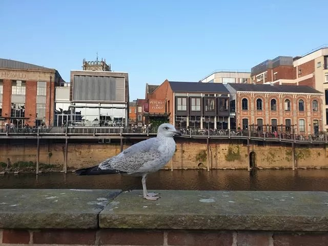 seagull on the river walls