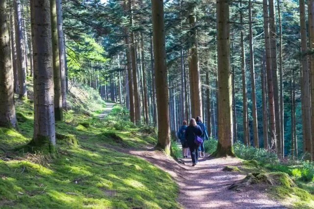 walking through the woods at Hafod