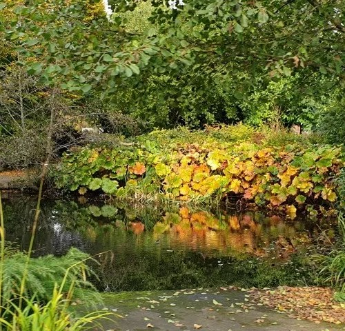 autumn colours at cannon hill park