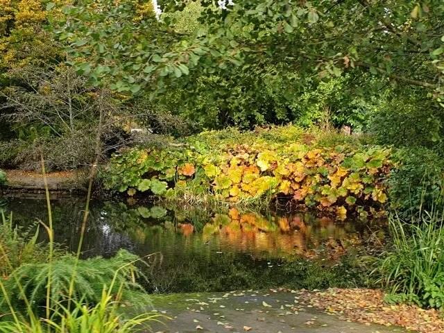 autumn colours at cannon hill park