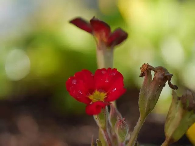 small red flowers macro shot