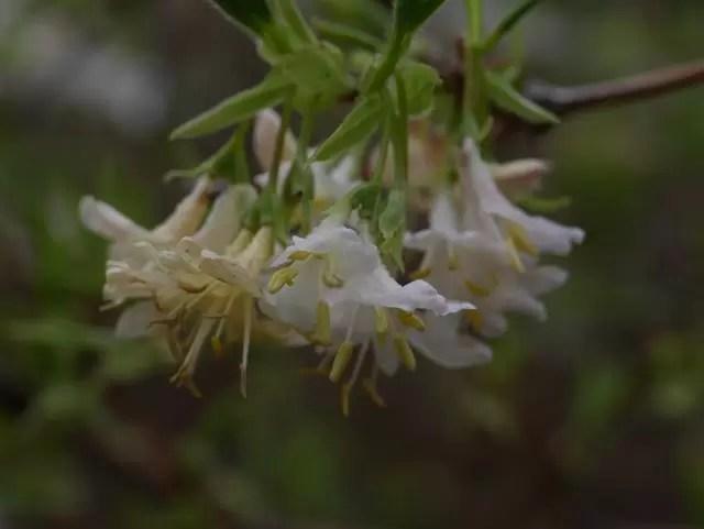 pretty white blossom on a branch