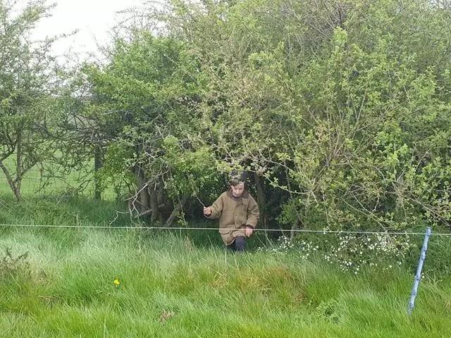 boy emerging from hedge gap