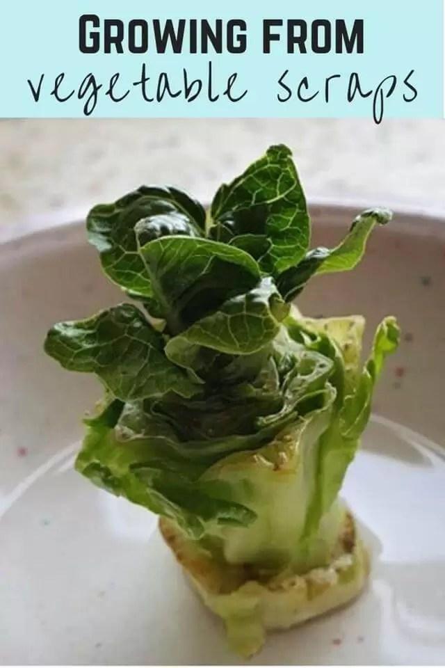 regrow veg