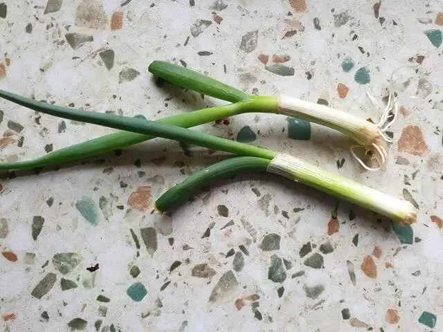 spring onions ready to harvest