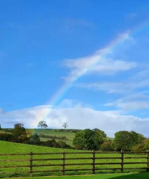 rainbow from a atree