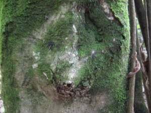 Istota Natury autor: wróżka Maria Bucardi
