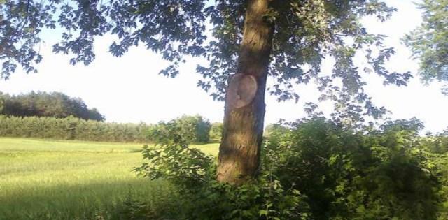 serce_drzewo