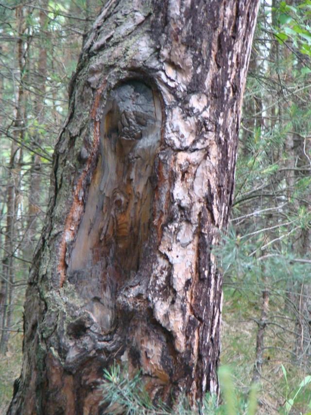 Istota Natury od Moniki - Blog Marii Bucardi