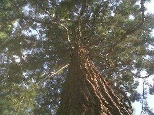 """galeria Joanny do konkursu Marii Bucardi """"Twoje drzewo"""""""