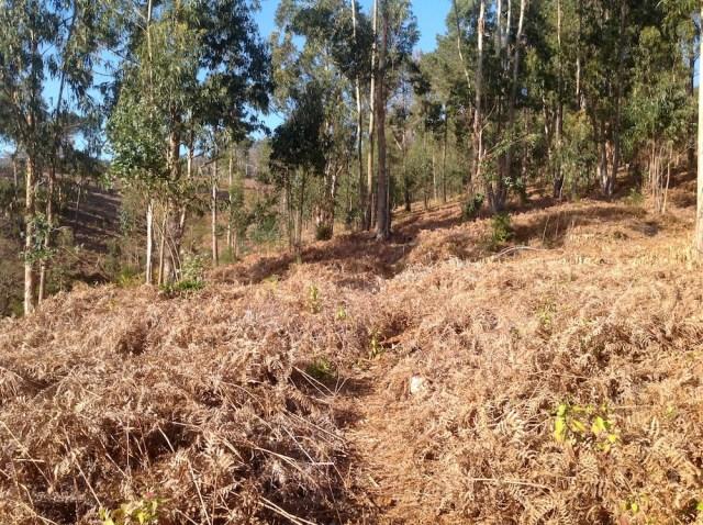 Wsrod paproci i eukaliptusow