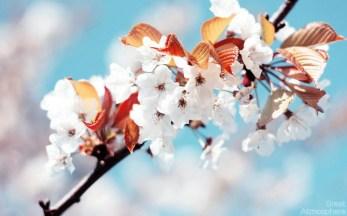wiosna11