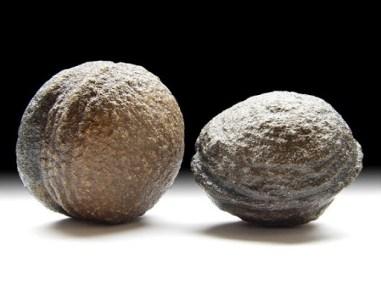 Zywe kamienie Moqui