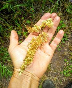jeszcze inne nasionka