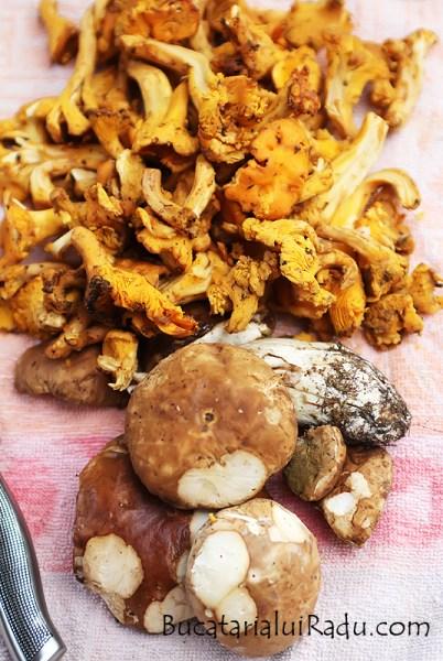 urechiuse ciuperci
