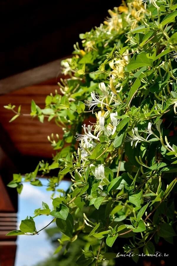 Apă infuzată cu lămâie şi flori de caprifoi