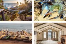 Crystal Cove' Nonprofit Branding Strategy Success
