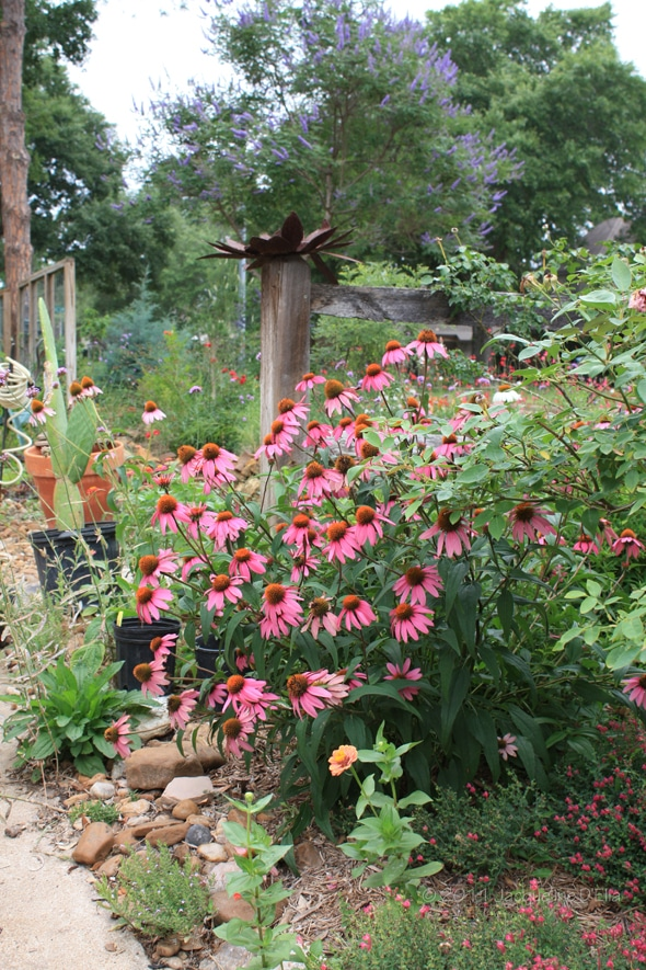 buchanan s native plants
