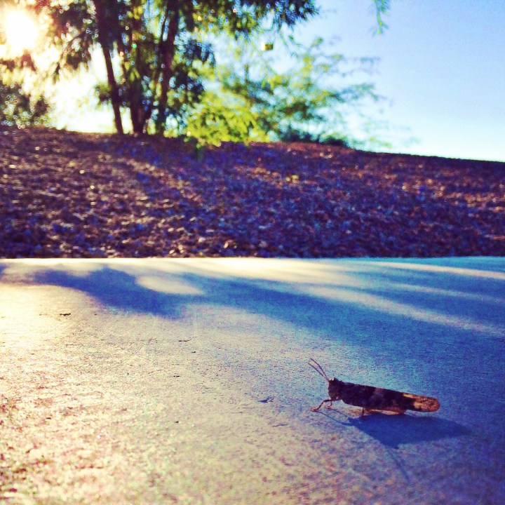"September 24 :: p365:: year 34 day 331 :: I made a new friend today on my run. His name is ""Chirp""."