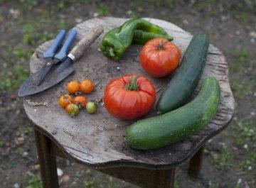 Zum Glück Gemüse. 350 Gemüserezepte für alle Jahreszeiten: Die Bibel der Gemüse Küche - 12