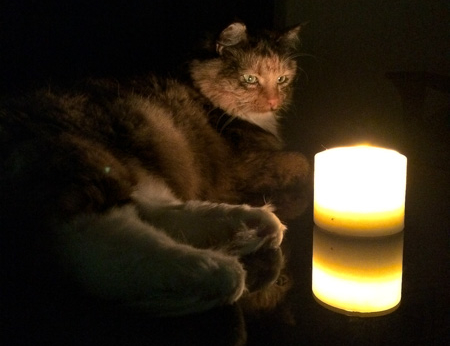 The Candle: cats of the multiverse