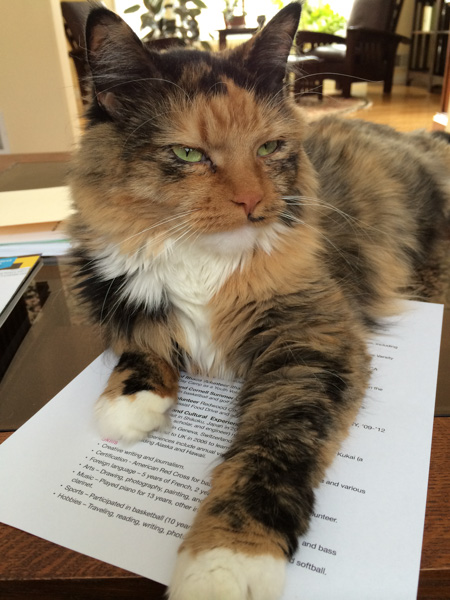 The Editor: Cats of the Multiverse