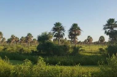 Se busca recuperar tierras para la producción