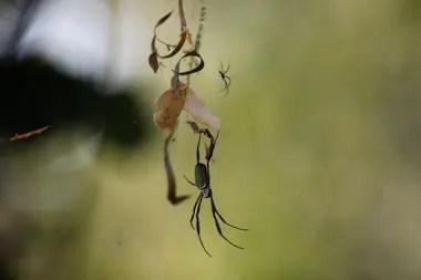 Arañas en el parque municipal de la Ribera Norte de San Isidro