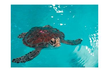 Las tortugas marinas son consideradas especies protegidas en China