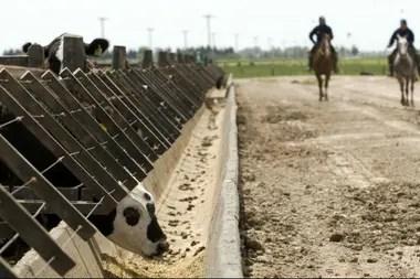 Para los países del Nafta se exige que los animales provengan de engordes a corral de más de 100 días