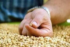 El Inase tomará el control de las muestras sobre la soja