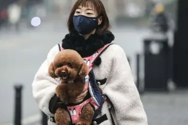 La mayoría de las infecciones están en China, pero otras naciones están luchando contra el virus