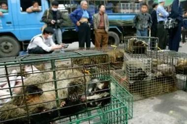 Las autoridades confiscan civetas en el mercado de vida silvestre de Xinyuan en Guangzhou para evitar la propagación del Sars