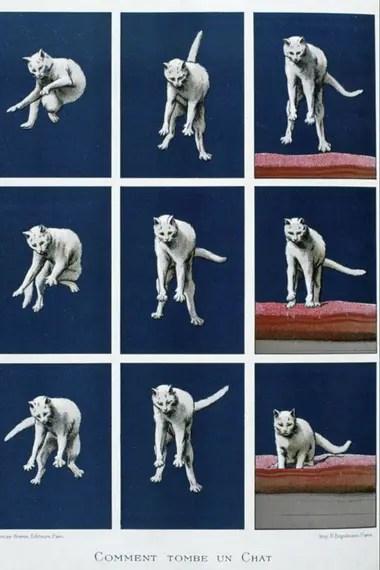 El fisiólogo francés Etienne-Jules Marey derrumbó la teoría del movimiento angular en la caída del gato