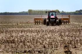 Fuerte retraso en la implantación del cultivo