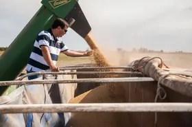 Por el grano las fábricas pagaron en forma abierta $ 4000 por tonelada disponible
