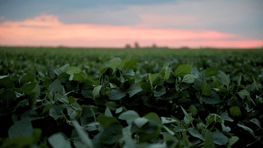 DeepAgro usa inteligencia artificial para mejorar el uso de herbicidas