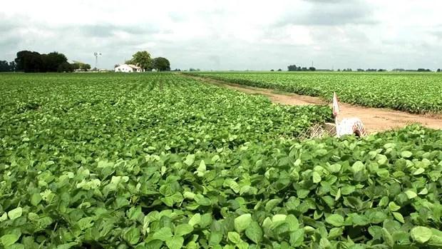 El monocultivo de soja amenaza la sustentabilidad del sistema