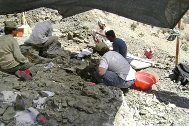 Los trabajos de excavación del equipo de paleontólogos