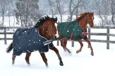 Metro Meteor (izq.) y Pork Chop no coincidieron en las pistas, pero sí se entretienen bajo la nieve en el campo
