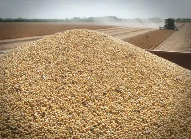 La soja, en el centro del debate por la nueva ley de semillas