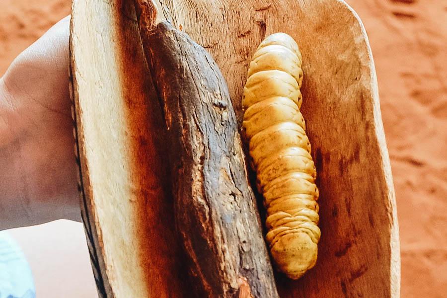 Weird Food: edible Witchetty Grub